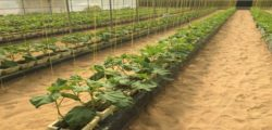 Team from RAKRIC visited Green house farms in Dubai